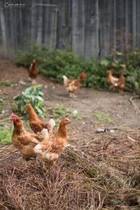 Reine Lungau Bio Bauernhof